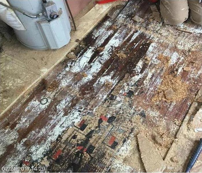 Mold Remediation 3 Essential Tips for Dealing With Mold Damage