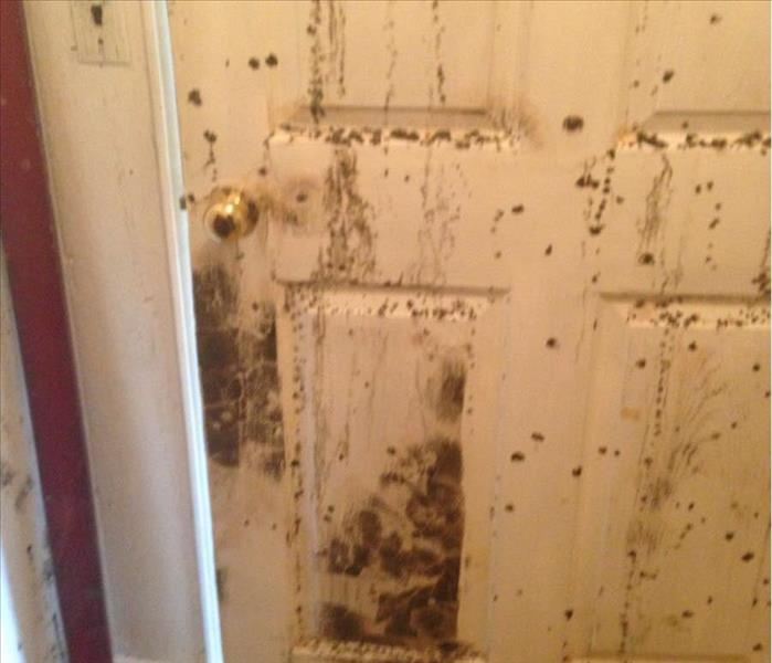 Mold Remediation Mold in Bowling Green Home
