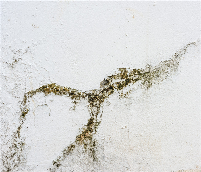 Mold on a white wall